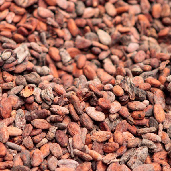 20190929 HavenSafari Cacao hr-0170